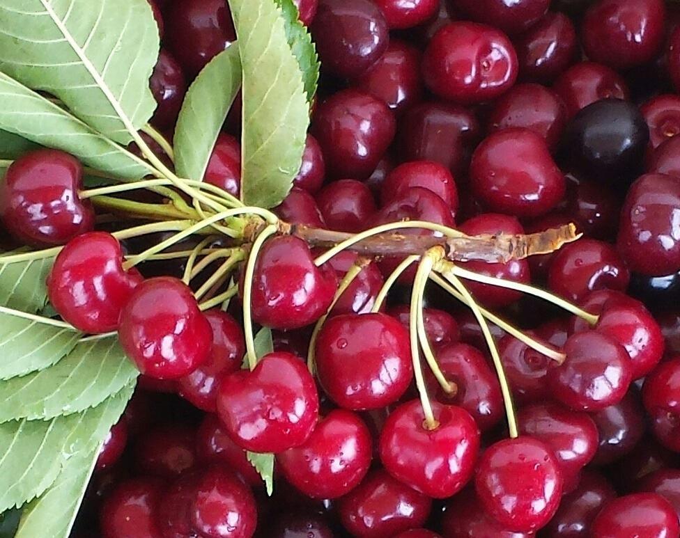 How to Freeze Cherries (Fruit)
