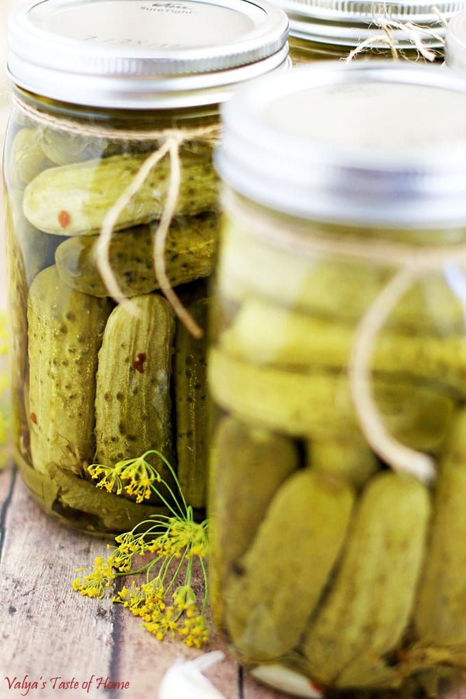 his Easy Canned Dill Pickles Recipe has a long history in my family, and most other Slavic households, as I can imagine. I really enjoy canning fruit and vegetables.